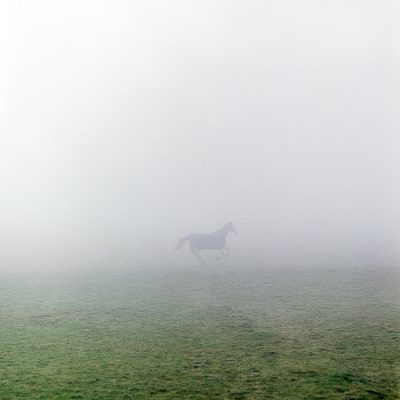 Documentary and editorial photographer horse in fog